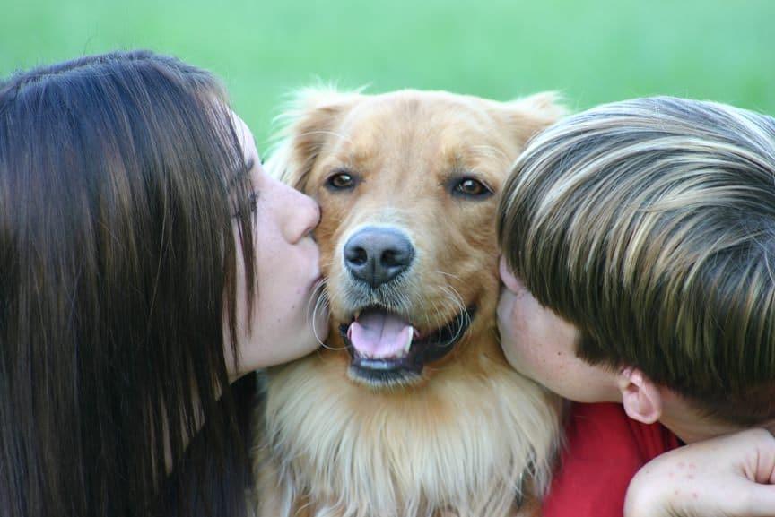 Evcil Hayvanlar Ve Dikkat Edilmesi Gerekenler