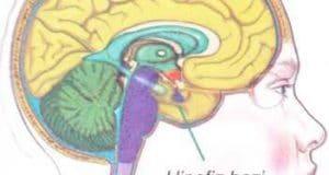 Hipofiz Bezi Hastalıkları