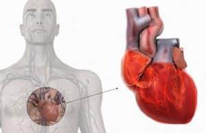 Kalp Kası Hastalıkları Tedavisi Mümkün Mü?
